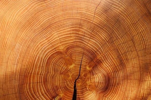 Holz für Gartenzaun